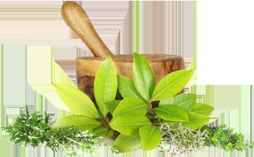 ayurveda-herbs-image